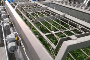 Spinach processing machines, Spinach washer, Washer for spinach, Food processing equipment, Washer for food industry, Washer for vegetable, pračka špenátová, Vegetable washer